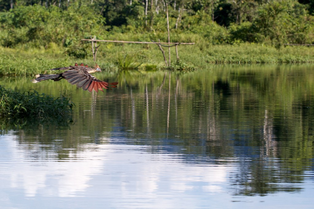 Adventure Video: Manu National Park